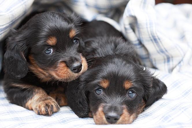 米空港でセラピー犬を導入「もふもふ犬」で癒されよう♪