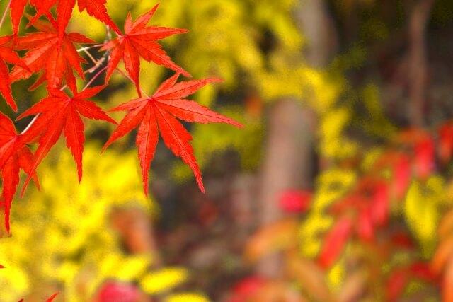 紅葉の季節におすすめ!海外でも秋が満喫できる場所!
